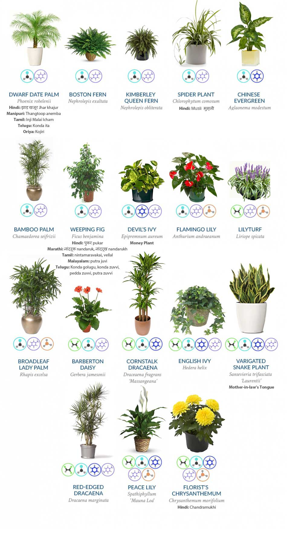 Collection of the Four Best Clean Air Plants for Your Home
